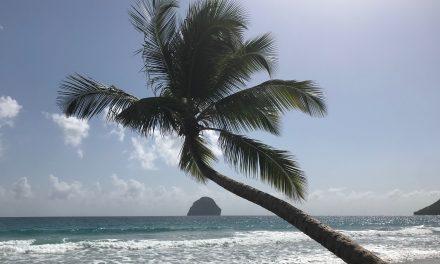 Cabinet de 3 radiologues – Remplacements Martinique
